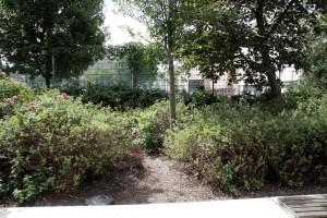 Popp Park 300715 VJ - (6)