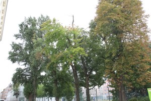 VJ Popp Park - (16)