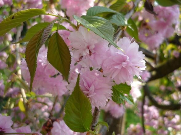 Japanischer garten 2017 vienna journal for Japanischer ziergarten